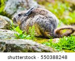 Small photo of Wild chinchilla viscacha sitting among the rocks in Peru with soft focus
