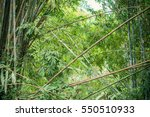 Bamboo Forest Bamboo Grove ...