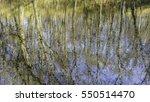 Woodland Abstract Of Stasis An...
