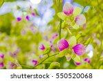 beautiful flower gardens at... | Shutterstock . vector #550520068