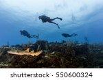 nurse shark with scuba divers... | Shutterstock . vector #550600324