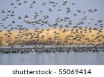 wildelife   Shutterstock . vector #55069414