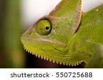 close up of green chameleon eye. | Shutterstock . vector #550725688