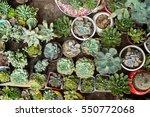 Miniature Succulent Plants In ...