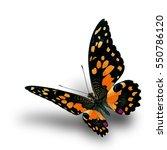 beautiful flying orange... | Shutterstock . vector #550786120