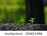 young plant in the morning... | Shutterstock . vector #550821988