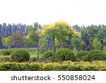 Small photo of afforestation tree