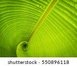 Abstract Greenery Nature Banan...