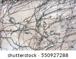 background  texture wall from... | Shutterstock . vector #550927288