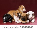 Adorable Pit Bull Puppies On...