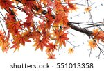 Red Autumn Maple Tree Leaves ...