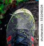 Grass Seed On Shoes
