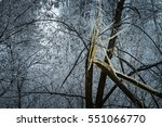 Broken Tree In Winter Park ...