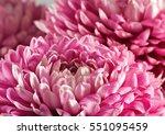 Image Of Beautiful Flower Aste...