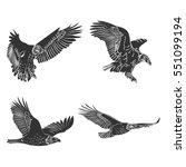 Vector Eagle And Falcon ...