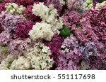 Purple And White Lilac Flowers...