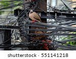 Bird On Electric Pole