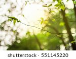 abstract nature leave... | Shutterstock . vector #551145220