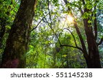 abstract nature leave... | Shutterstock . vector #551145238