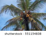 coconut palm tree under blue sky | Shutterstock . vector #551154838