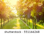 grape harvest  | Shutterstock . vector #551166268