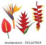 tropical flowers illustration ... | Shutterstock .eps vector #551167819