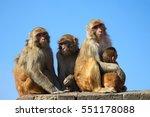 monkey family on blue sky... | Shutterstock . vector #551178088