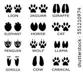 animal footprints vector. set... | Shutterstock .eps vector #551210974