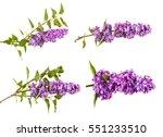 flowering branch of lilac.... | Shutterstock . vector #551233510