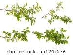 plum tree branch with green... | Shutterstock . vector #551245576