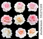 Collage Delicate Pink Roses Isolated - Fine Art prints