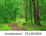 Winding Footpath Through Green...