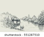 cow drinking water at the river ... | Shutterstock .eps vector #551287510