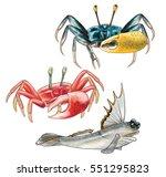 Crab And Mudskipper