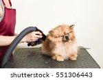 Stock photo pomeranian spitz in dog salon female hands using hair dryer on cute dog in salon 551306443