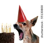 a chihuahua blowing out candles on a piece of cake - stock photo