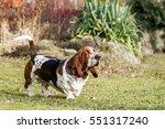 Running Basset Hound  Run...