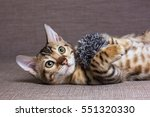 Stock photo cute bengal cat lying on the bed and plays with a ball 551320330