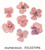 Pressed Dried Pink Flowers Scanned - Fine Art prints