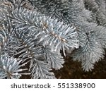 Small photo of Pine branches close-up with the frozen snow on tenterhooks