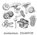 Mushroom Hand Drawn Vector...