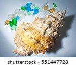 shells and sea glass | Shutterstock . vector #551447728