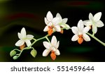 branch with orchid flowers... | Shutterstock .eps vector #551459644