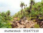 Palm Tropical Beach. Landscape...