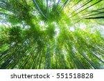 bamboo forest   Shutterstock . vector #551518828
