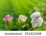cotton flower | Shutterstock . vector #551522548