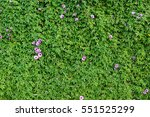 A Green Wall With Morning Glory