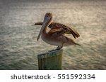 Pelican Bird Spreading His...