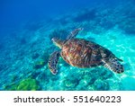 sea turtle in water. wild... | Shutterstock . vector #551640223
