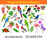collection of tropical exotic... | Shutterstock .eps vector #551685154
